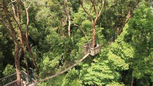 Bukit-Bangkirai-canopy-walk-2