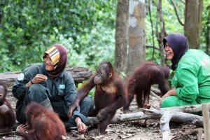 visit-myborneo-Orangutan-experience-1
