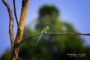 Bird-watching-2